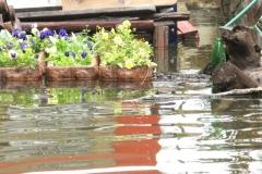 poplave-konoba-kod-goce-i-renata-114