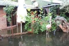 poplave-konoba-kod-goce-i-renata-81
